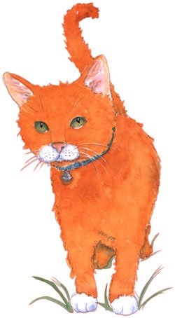 Rover Cat